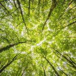 Sint-Joriskerk luidt de 'noodklok' voor het klimaat